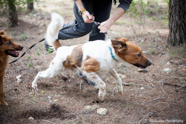 Deportes con perro – Juegos Olímpicos Lobo Descafeinado
