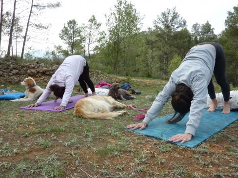 curso de meditación y yoga con perro - Lobo Descafeinado