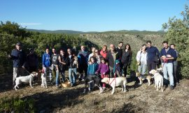 RESUMEN 2016 – Actividades con perro y curso adiestramiento canino