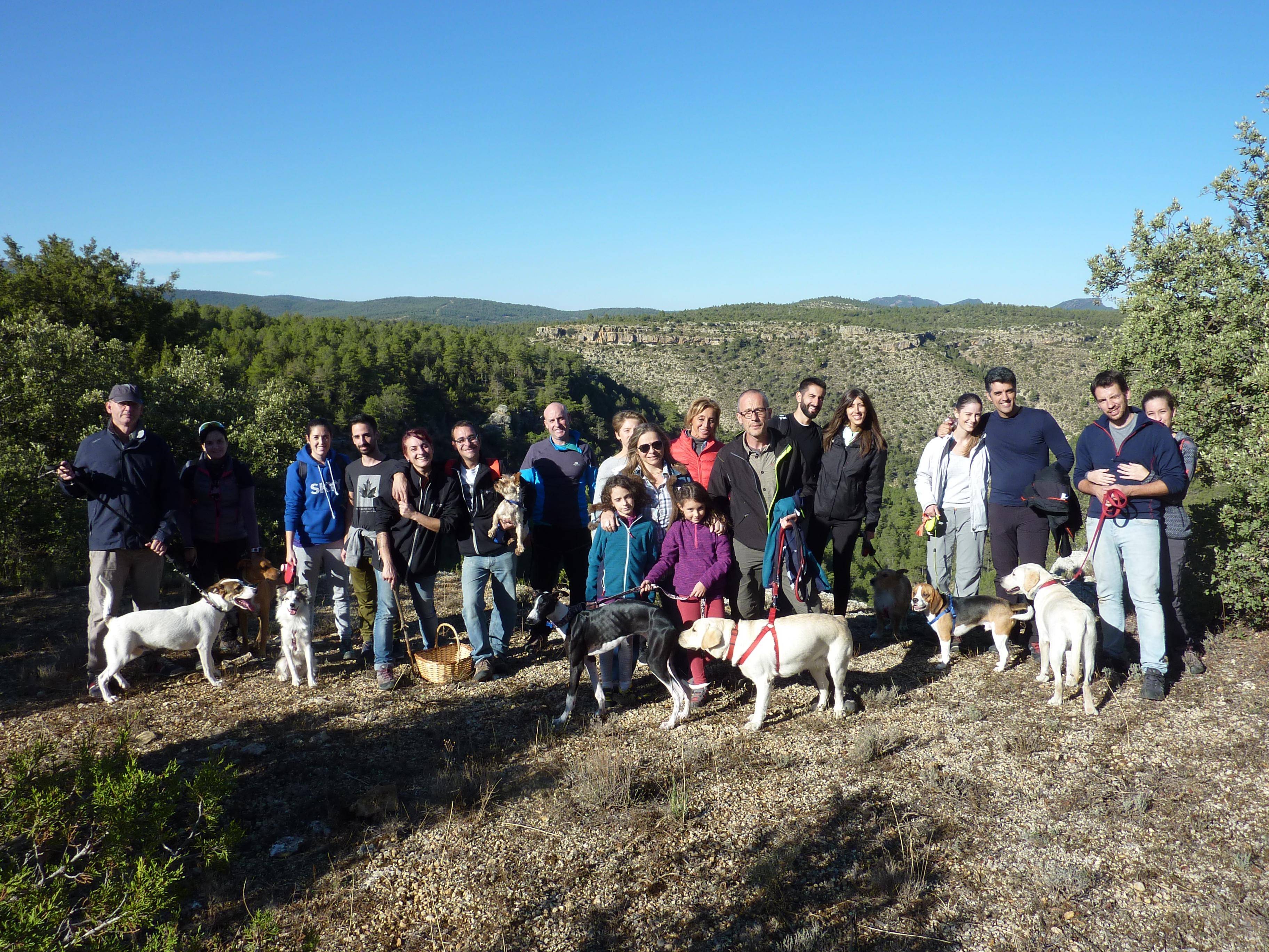 Actividades con perro y curso adiestramiento canino 2016 (3)
