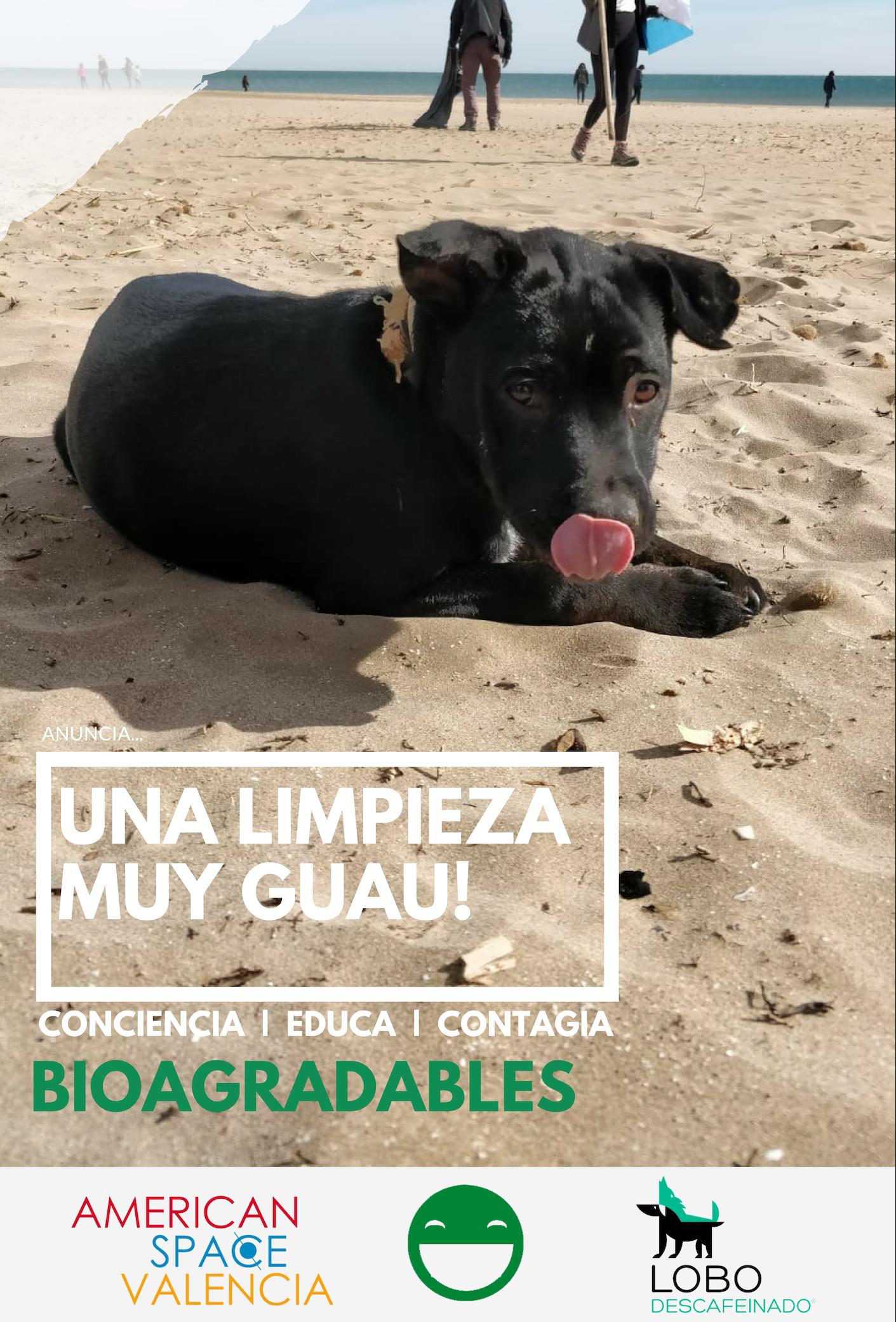 Actividades con perros en grupo – Búsqueda y limpieza de plásticos Lobo Descafeinado