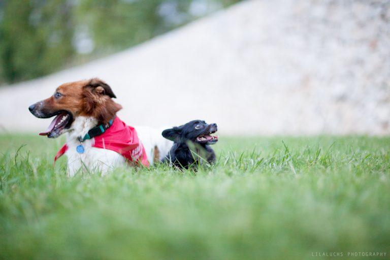 curso-adiestramiento-canino-en-grupo-Valencia-Lobo-descafeinado