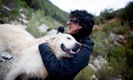 COMPAÑEROS POR NATURALEZA -Taller educación canina en la naturaleza