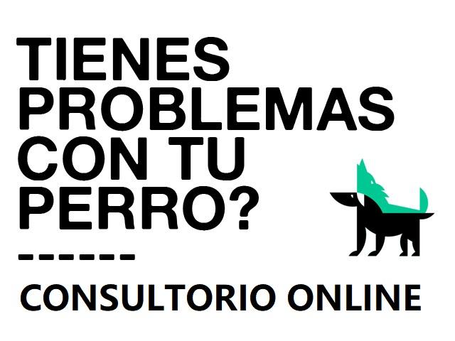 Consultorio educación canina online